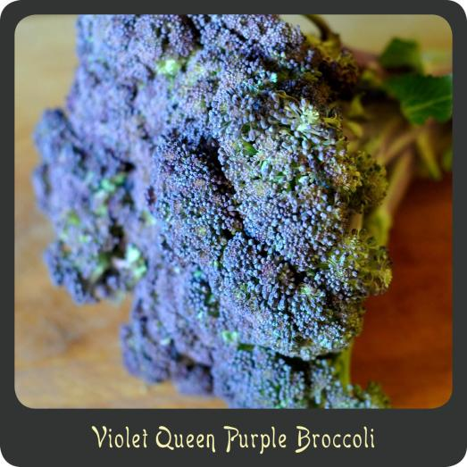 DivaDiCucina_PurpleBroccoli